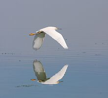 Snowy Egret Reflections by Wing Tong