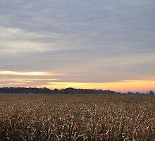 Autumn Cornfield Sunrise by mltrue