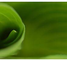 Green Swirls by Lindsay Martin
