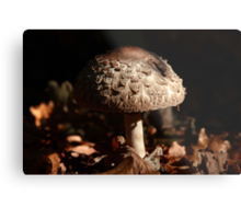 Focus on the Forest Floor Metal Print