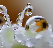 Daisy bubbles by Lyn Evans