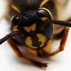 Portrait of a Wasp by Adrian Richardson
