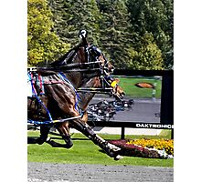 Winning By A Nose Photographic Print