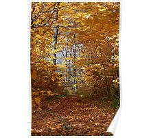 Hawthorn Hollow Woods Poster