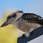 Kookaburra by Helen Greenwood