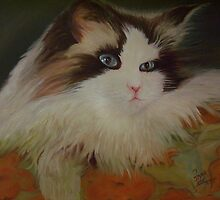 Angel, Laura's Cat by Noel78