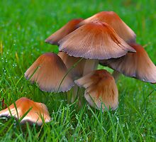 Mushrooms in my backyard by Adri  Padmos