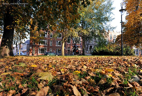 Autumn in Holland by AJPPhotography