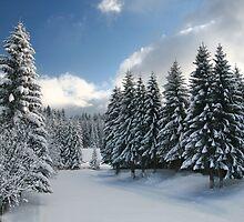 White Winter Glade. by demigod