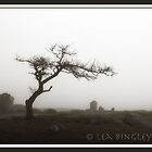 Misty Foggy Tree by leabrigitte69