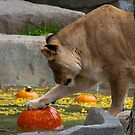 A Lion's Pumpkin Party by Jarede Schmetterer