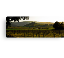 Napa Valley Panorama from the Silverado Trail Canvas Print
