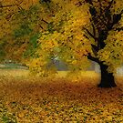Autumn In Michigan by Kimcalvert