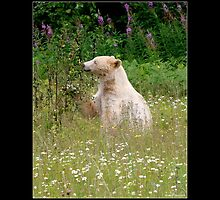 Contentment Spirit Bear Motivational Poster by Val  Brackenridge