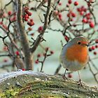 A Robin On A Branch by GoWildScotland