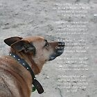 God&#x27;s Dog Poem by Diana-Lee Saville