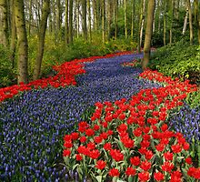 Blue Flower Path -  hyacinth and red tulips  by Artilan