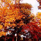 Autumn in New Jersey by Monica Engeler