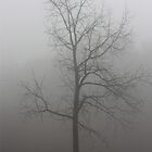 Misty Morning by Melody Ricketts