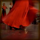 flamenco by olivepix