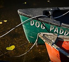 Dog Paddle by Kevin Bergen