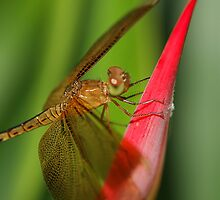 Enter The Dragon(Fly) by SharonJH