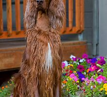 Wet Setter by Ann J. Sagel
