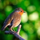 Robin by Andrew Jones