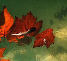 five red leaves by Juilee  Pryor