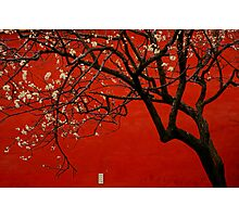 China Red  Photographic Print