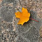 Yellow and Gray by Nancy Barrett
