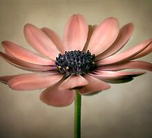 Cape charm by Mandy Disher