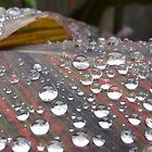 Morning dew by ChristinaR