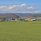 Tasmania by Mishka Góra