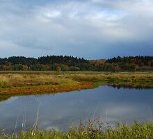 Ridgefield Washington Wildlife Refuge  by Bob Hortman