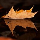 Reflective Leaf by lloydsjourney