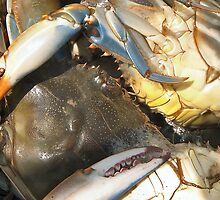 Multicoloured Crabs by citrineblue