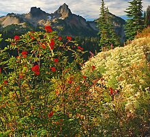 Mountain Berries by Bryan Peterson