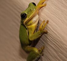 Ribbit by CDNPhoto