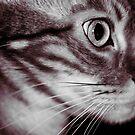 Diva in profile (B&W) by evilcat
