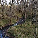 Our Creek by Lynn Moore