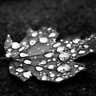 Black and White Water Drops by alina98