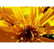 yellow and sunny Photographic Print