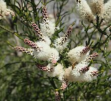 Cream Bottle Brush with Bee by TeAnne