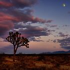 Full Moon Over Mojave  by jodice