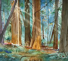 Avenue of The Giants by John N.  Stewart