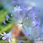 Glittering  by lochithea