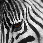 Zebra by Corien