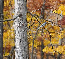 Blue Jay Autumn Leaves by amyklein196203