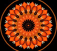 A Slice Of Citrus..Kaleidoscope by judygal